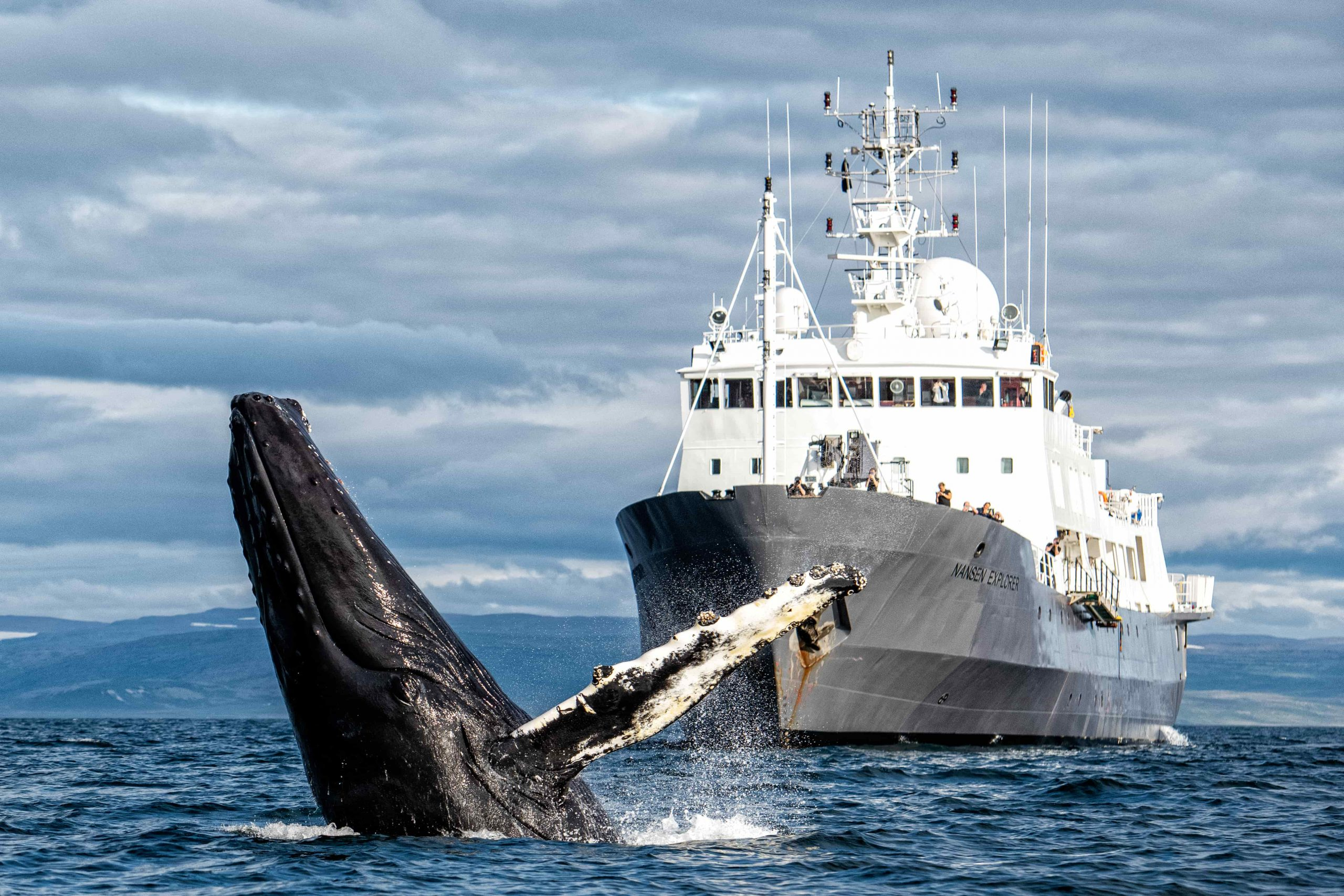 Nansen Explorer with Breaching Whale in the Foreground