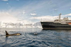 Orcas Approach Superyacht Legend in Antarctica