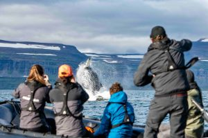 Nansen Explorer Whale Watching