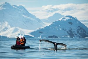 People in Zodiac whale watching in Antarctica