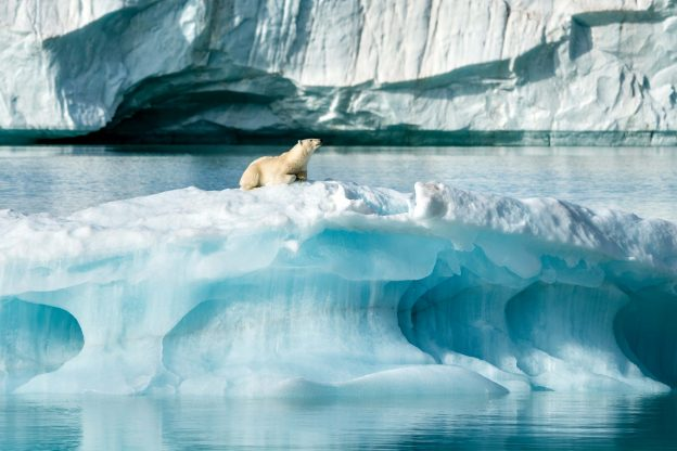 Polar bear on iceberg in Arctic Svalbard