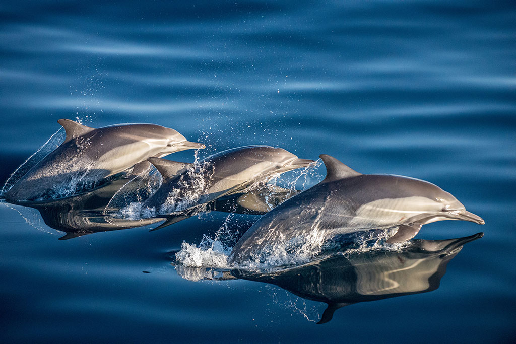 Dolphins in Baja