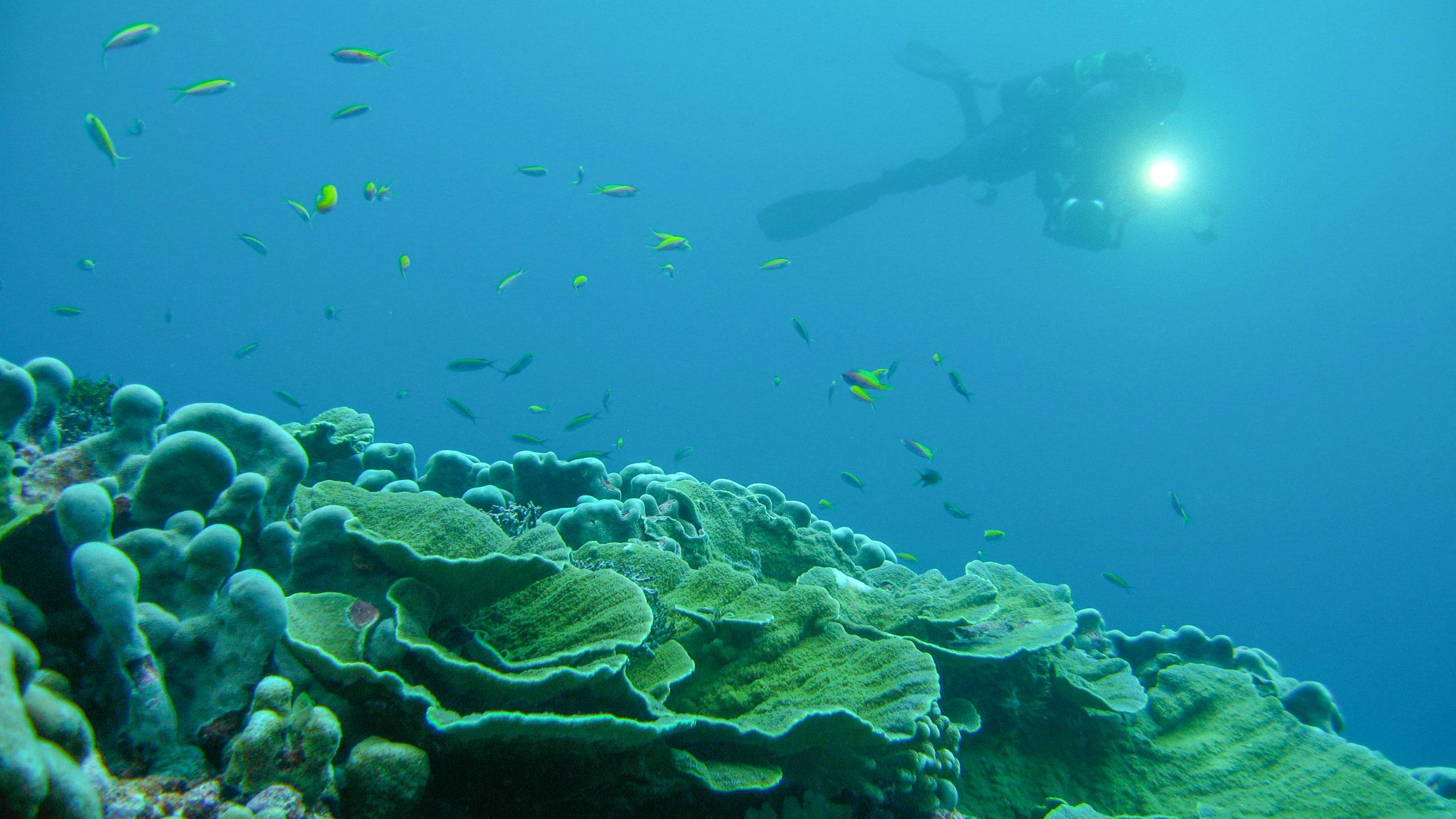 Diver and coral reef in Millennium Atoll, Kiribati, Micronesia